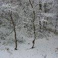 初雪その2